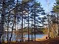 Солнечный день на озере. Орехово. - panoramio.jpg