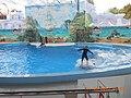 Сочинский дельфинарий парка «Ривьера». 76.jpg
