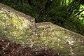 Сходи лісопарку (Тонкочеєва) IMG 9570.jpg
