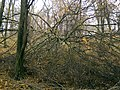 Украина, Киев - Голосеевский лес 151.jpg