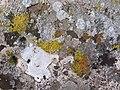 Формы жизни. Растительность на тарханкутских камнях. - panoramio.jpg