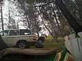 غداء على الطريق - سوريا 2010 - panoramio.jpg