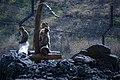مجموعه عکس از رفتار میمون ها در باغ وحش تفلیس- گرجستان 20.jpg
