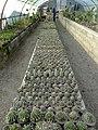 گلخانه کاکتوس دنیای خار در قم. کلکسیون انواع کاکتوس 18.jpg