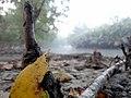 হ্লুদে জড়ানো শ্বাসমূল.jpg