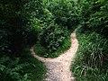 义务植树基地步道 - Voluntary Tree Planting Station Trail - 2015.07 - panoramio.jpg