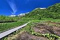 栂池自然園 - panoramio (10).jpg