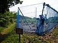 相原ブルーベリー農園 - panoramio.jpg