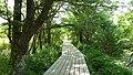 自然のトンネル - panoramio.jpg