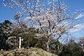 芳賀富士山頂.jpg