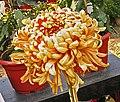 菊花-硃砂紅霜 Chrysanthemum morifolium 'Cinnabar Red Frost' -中山小欖菊花會 Xiaolan Chrysanthemum Show, China- (12026696404).jpg