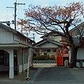 近鉄上ノ太子駅前のセンダンの木 Chinaberry tree in front of Kaminotaishi station 2012.2.12 - panoramio.jpg