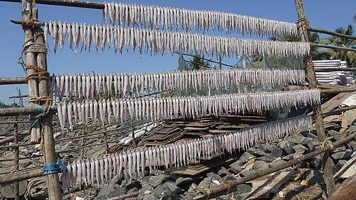 drying Bombay Ducks
