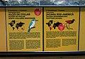 026 Zoo de Barcelona, plafons informatius a l'aviari.jpg