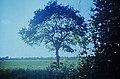 02 Kronshagen 1985 (17167767460).jpg