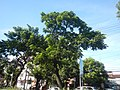 03129jfEspana Boulevard Landmarks Barangays Lacson Sampaloc Manilafvf 06.jpg