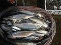0325jf2016 Rehabilition of Panasahan City of Malolos Bulacan Fishportfvf 02.jpg