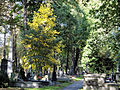 041012 Orthodox cemetery in Wola - 07.jpg