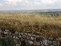08-Hadrians Wall-038.jpg