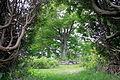 10467-Site du Patrimoine du Manoir Seigneurie de St-Vallier - 024.JPG