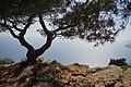 13260 Cassis, France - panoramio (6).jpg