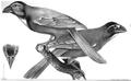 1847 BostonJournal NaturalHistory v5 illus4.png