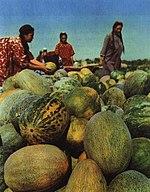 1965-10 1965年 新疆哈密瓜.jpg