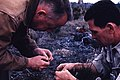 1965. George Green and Tom Silver. European pine shoot moth damage. Ontario. (35260695403).jpg