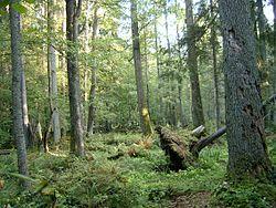 Lista del Patrimonio Mundial. 250px-2005-09_Białowieski_Park_Narodowy_3