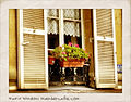 2011 windowbox Paris 6199722204.jpg