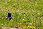 2012-05-28 Fotoflug Cuxhaven Wilhelmshaven DSCF9743.jpg