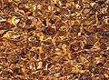 2012-09-11 Галька в прибое Чёрного моря.jpg