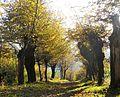 2014-11-02 Liebesallee im Herbst.jpg