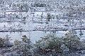 20151122-11(Lielais Ķemeru tīrelis).jpg