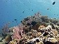2015 09 Bali 62 coral garden of Menjangan (22103288391).jpg
