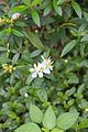 2016 Singapur, Ogrody botaniczne (173).jpg