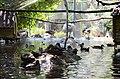 2019-08-10. Зоопарк в Придорожном 066.jpg
