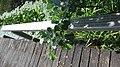 2020-06-19 — de waterlelies (2014) door herman de vries – monument voor Fechner, Diepenheim - 5.jpg