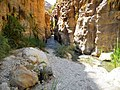 23 Wadi Bin Hammad Tropical Rain Forest Trail - Rock Formations and Vegetation - panoramio.jpg