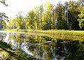 637. Museum-Estate Trigorskoye. Upper pond.jpg