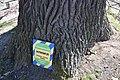 74-101-5012 Chernihiv Oak DSC 7943.jpg