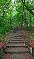80-385-5018 Kyiv Birch Grove SAM 0086.jpg