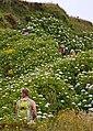 Açores 2010-07-23 (5160109887).jpg