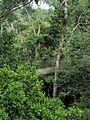 ACTS Canopy Walkway - Flickr - pellaea (5).jpg
