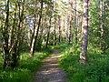 A Woodland Path at Spynie - geograph.org.uk - 1368932.jpg
