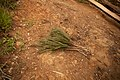 A broom made of twigs from Rwanda.jpg