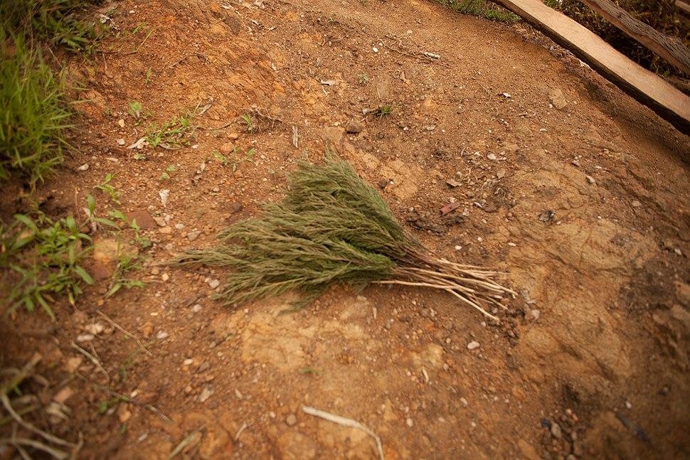 A broom made of twigs from Rwanda