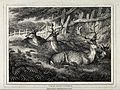 A group of fallow deer stags. Etching by W-S Howitt, ca 1799 Wellcome V0021532.jpg