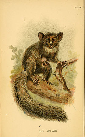 A hand-book to the primates (Plate I) (6028568729).jpg