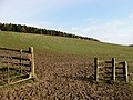 A muddy entrance to a grazing field - geograph.org.uk - 743359.jpg